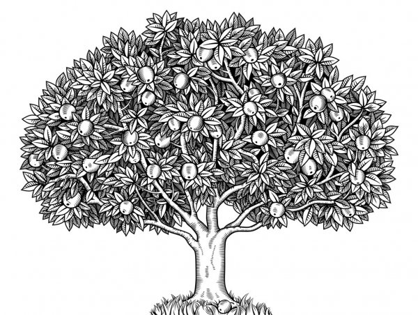 depositphotos 48817347 stock illustration apple tree